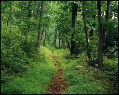 Appalachian Trail in PA