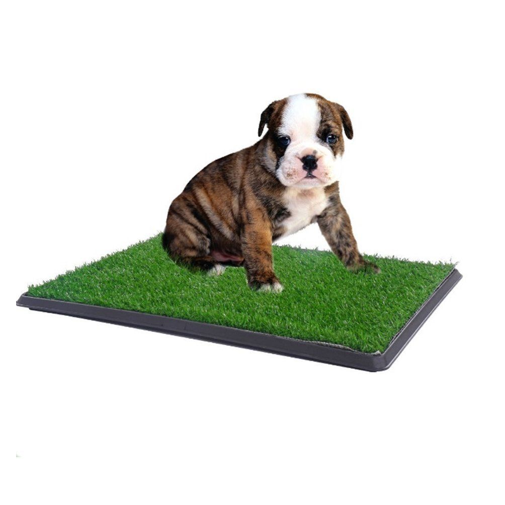 how to train my dog to pee on pads