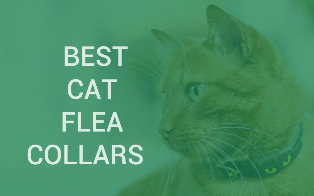 The Best Flea Collars For Cats Insect Cop Cat Fleas Cat Flea Collar Flea Collar