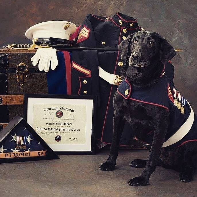Heart warming, obviously deserved retirement photo of decorated Marine Sergeant Rex.  Think of how many lives he saved.  Thank you, Marine, Semper Fi...