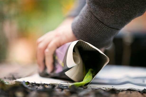 Una vez los calçots ya están hechos, se envuelven en papel de periódico para conservar el calor