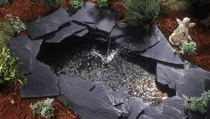 Pond Fountains, Plants And Fish Buying Guide