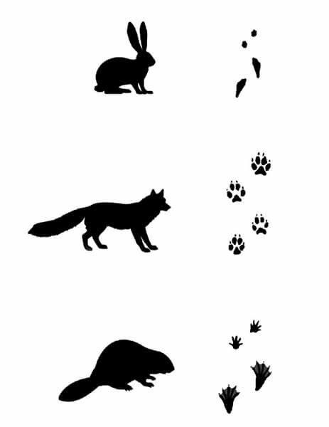 подошёл картинки следы диких животных кровля меди