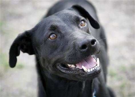 Shelters Find Creative Ways To Combat Black Dog Syndrome Black