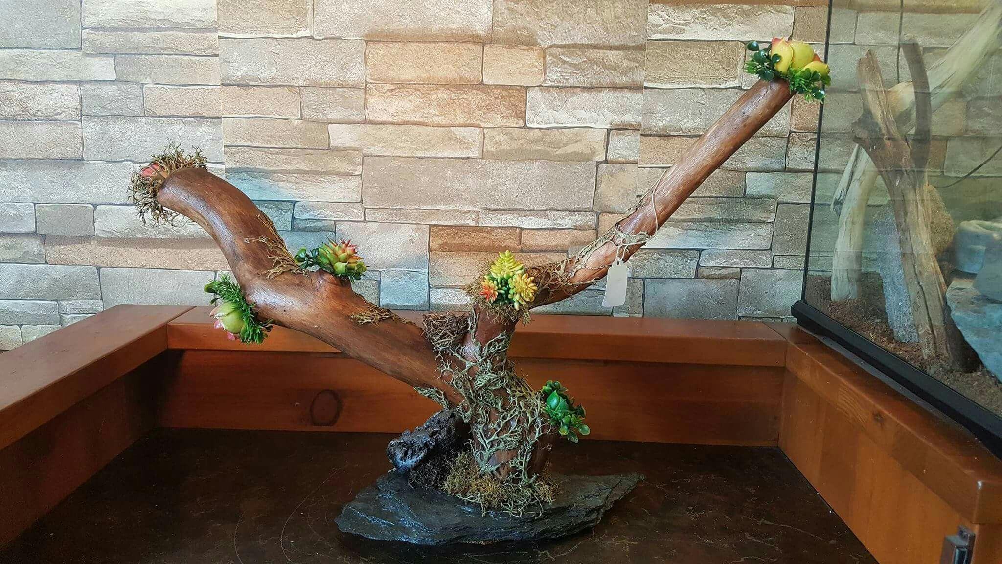 Terrarium Bois bois stylisé vivarium et terrarium | bois stylisé pour vivarium et