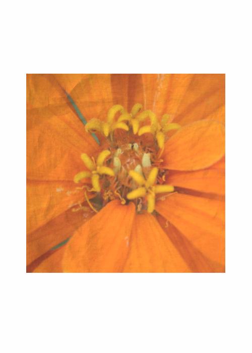 Silk Square Scarf - Meadow by VIDA VIDA hTPZUtFoTg