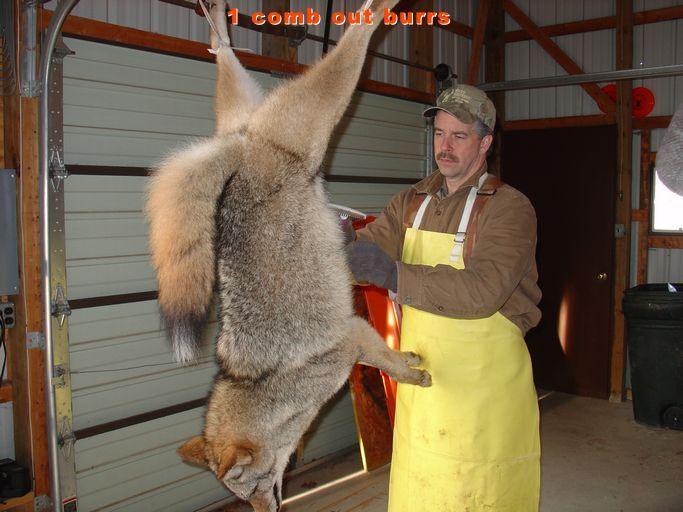canada goose fur controversy
