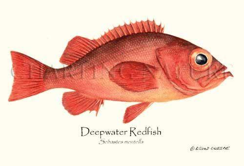 Weird Red Fish 7