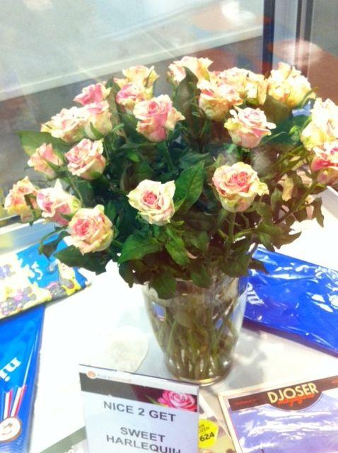 #Rose #SweetHarlequin; Available at www.barendsen.nl