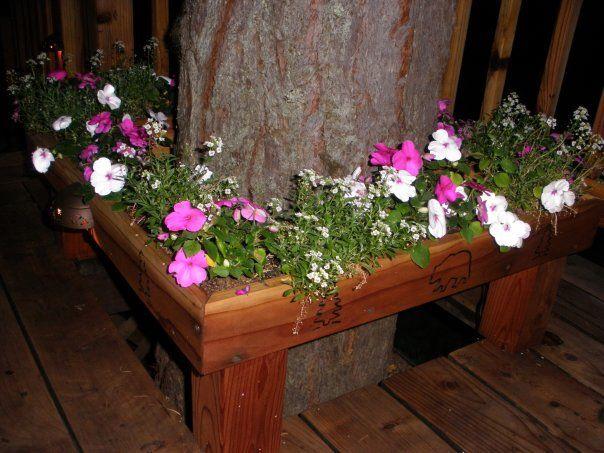 Planter Box Built Around Tree In Deck Outdoor 640 x 480