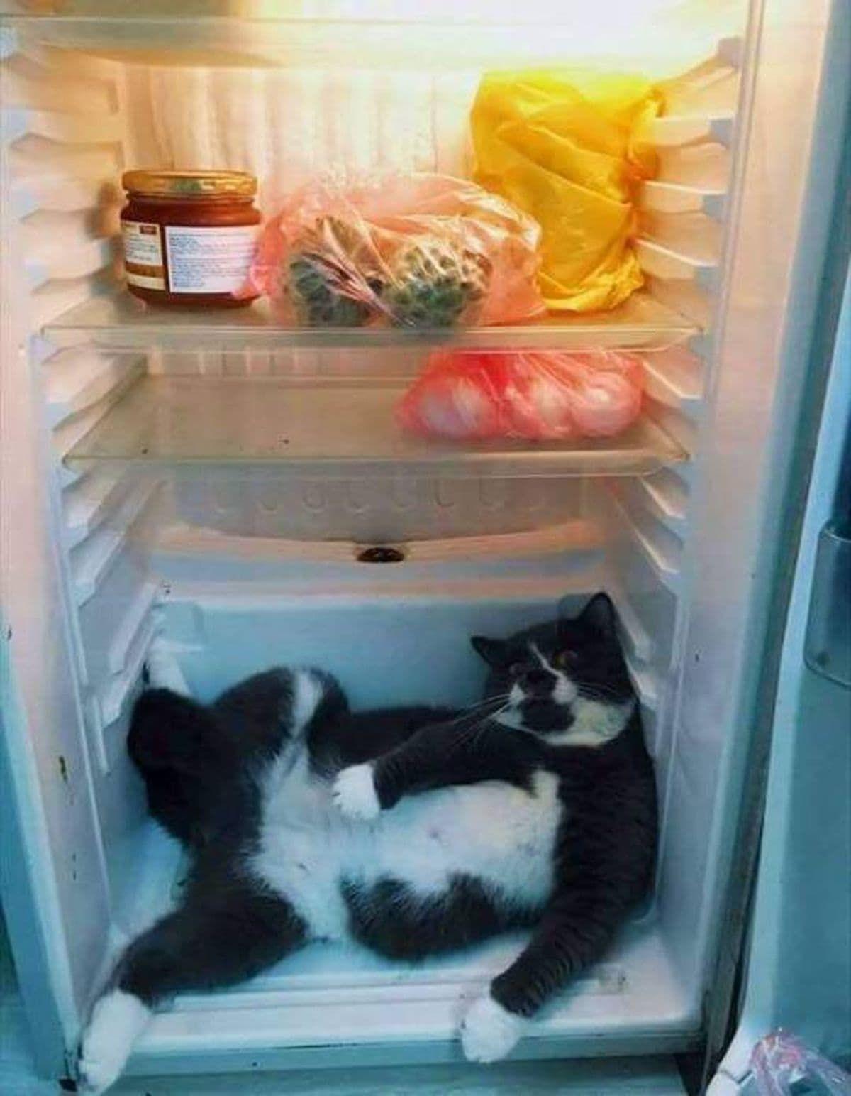 Der Grund für das ständige Nachsehen im Kühlschrank