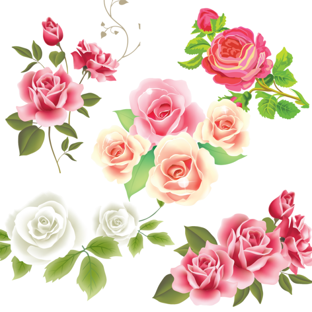 Pink White Rose Flower Vector Png And Vector Rose Flower Png Pink Flowers Background White Rose Flower