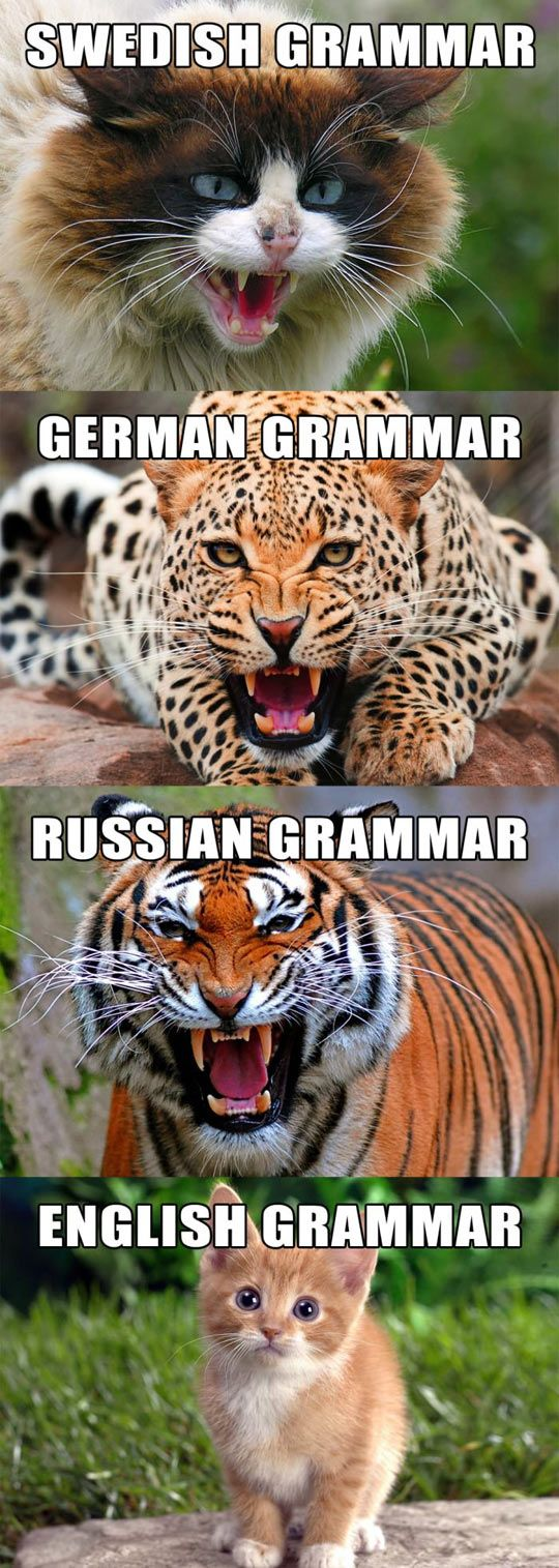 Language Grammar Described As Cats Swedish German Russian And English Funny Animals Funny Pictures Funny Cute