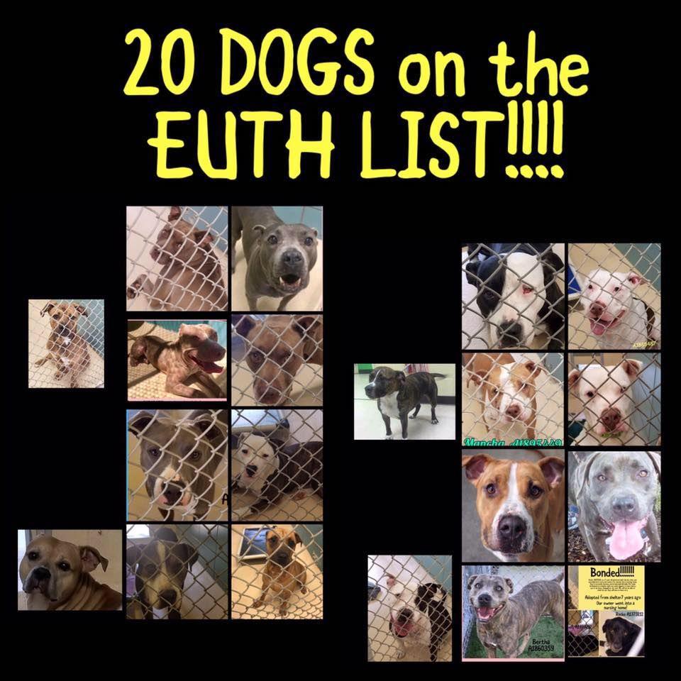 Tampa Florida Euth List Https Www Facebook Com Rescuemetampa