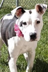 Pin On Dogs Who Need Homes