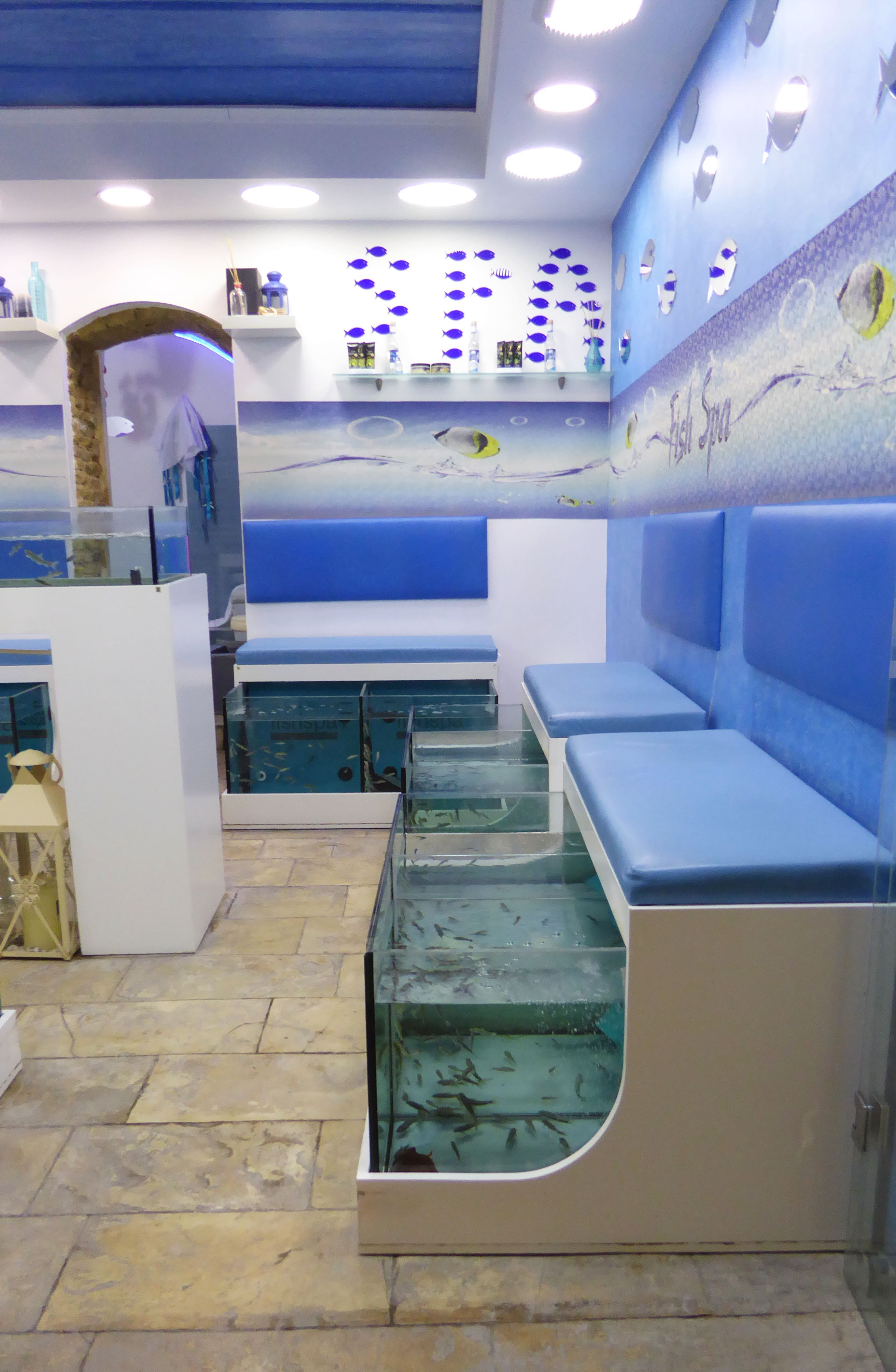 Freshwater fish medicine - Fish Spa Pedicures During A Treatment Customers Place Their Feet In Tanks Of Warm Freshwater