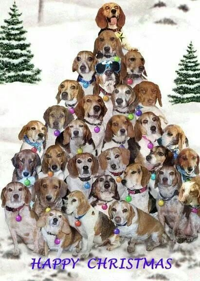 "Image result for christmas beagle tree"""