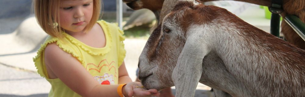 Rent traveling petting zoo animals and pony rides for