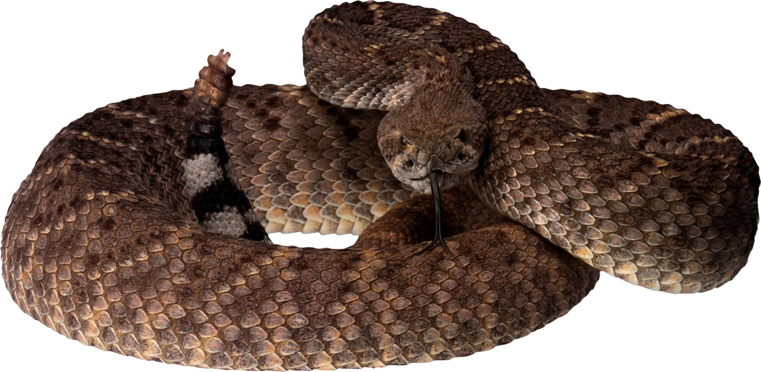 Snake PNG Cobras