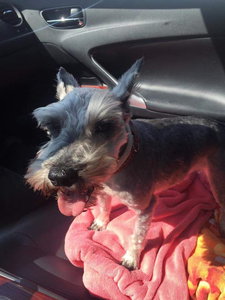 Pin by Sharon Boulanger on CT Pets - reunited/adopted/deceased