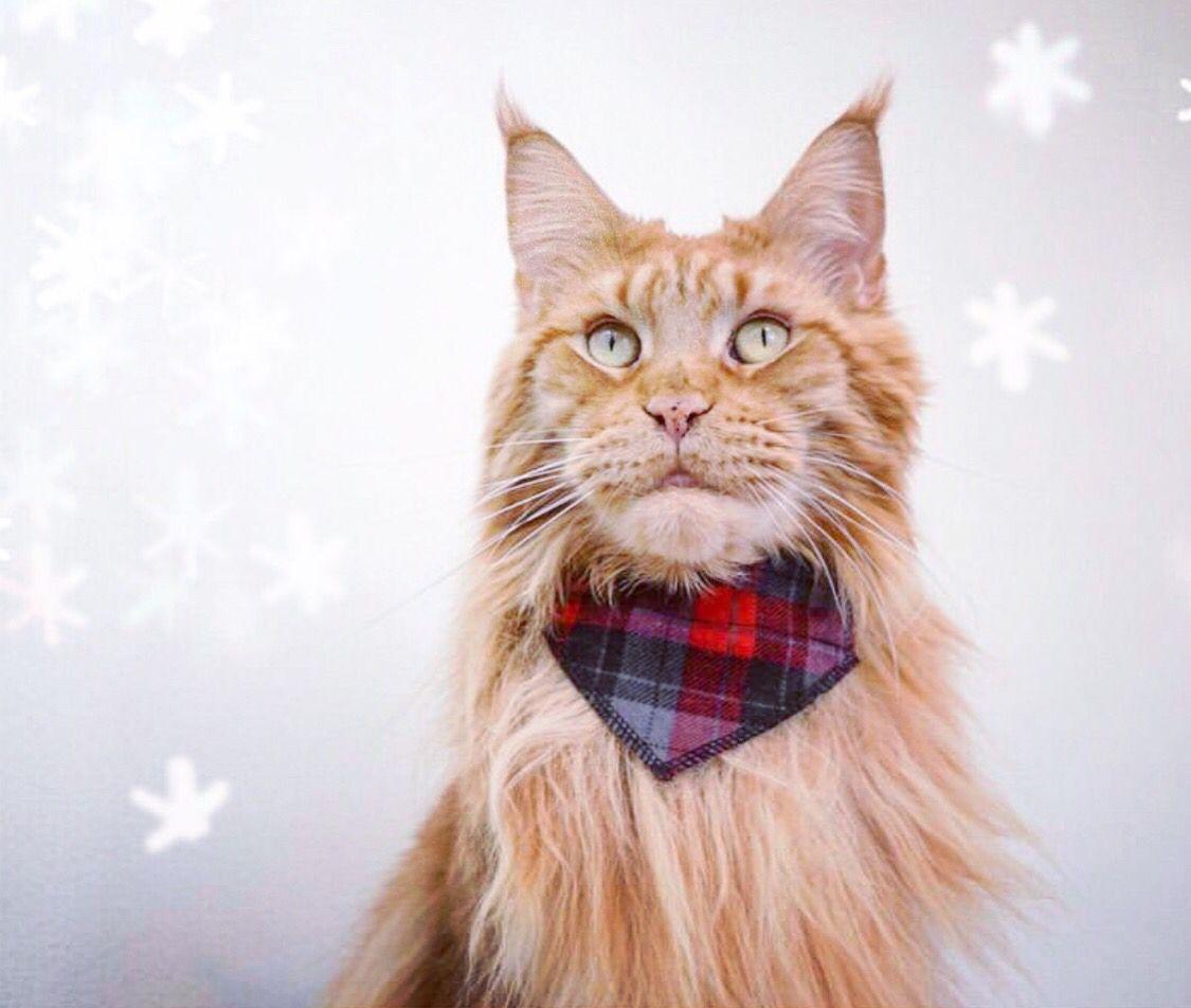 slides onto cat/'s existing collar Lumberjack Cat Bandana