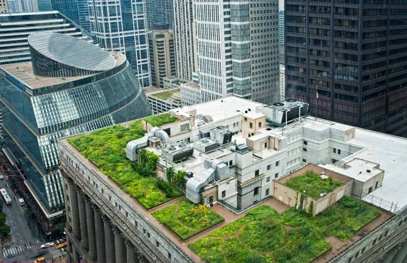 Chicago S City Hall Rooftop Gardens So Impressed Rooftop Garden Green Roof Roof Garden