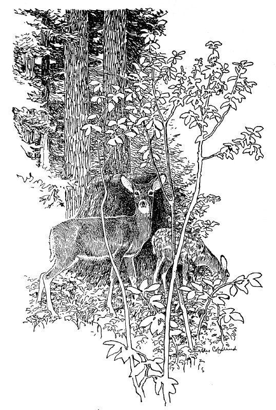 """Wood Wanderings"" by Winthrop Packard, Illustrated by ..."