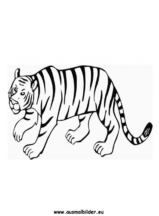 ausmalbild tiger zum ausmalen ausmalbilder