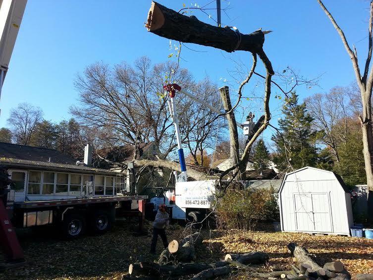 TopRated Tree Service Near Sewell New Jersey Tree