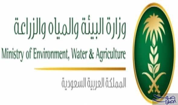 السعودية تحظر استيراد الطيور الحية من الهند قررت السعودية حظر اسيتراد الطيور الحية وبيض التفقيس والصيصان من الهند مؤقتا بعد ورو Environment Agriculture Water