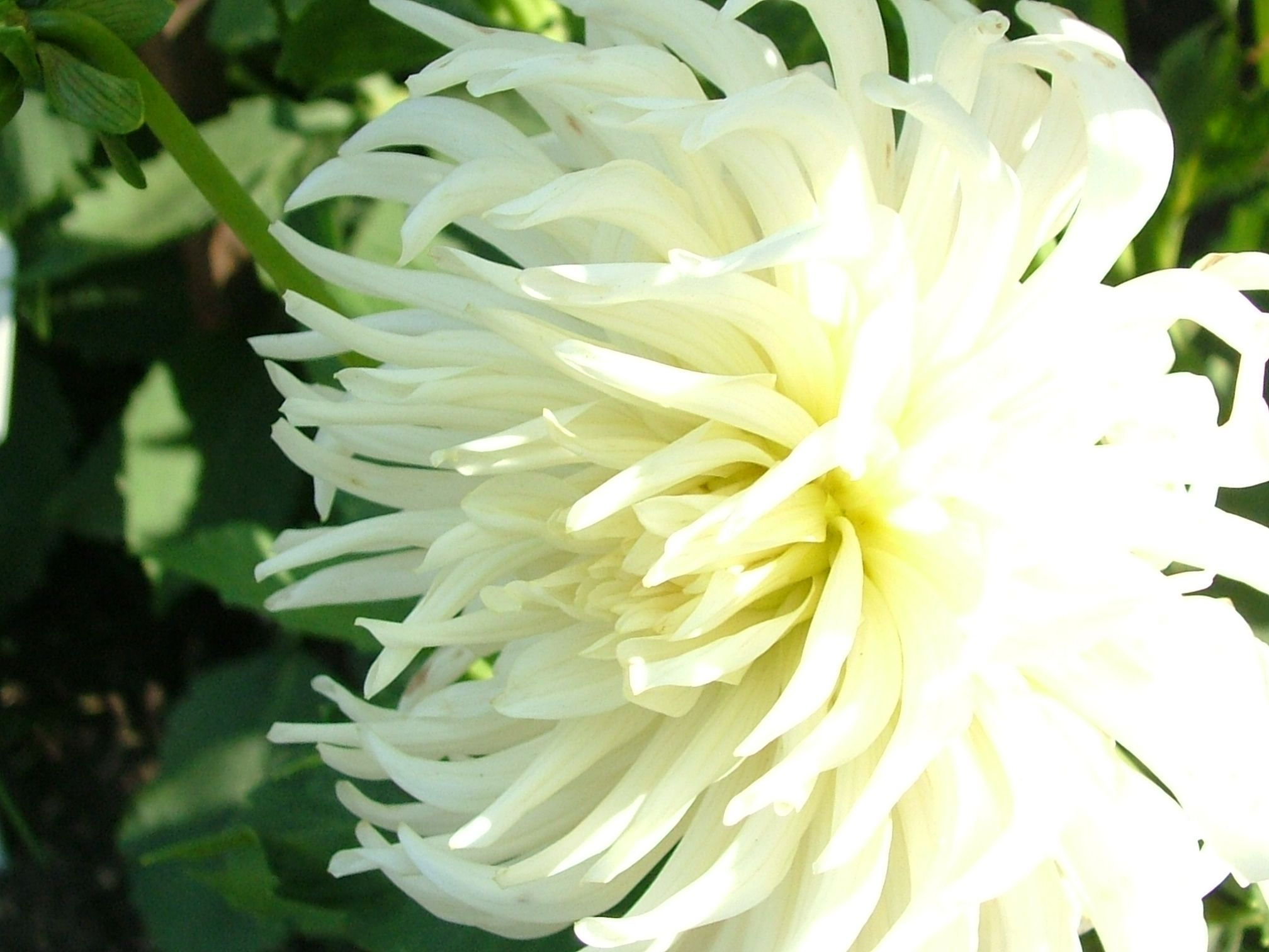 Related Image Flowers Pinterest Flowers Flower And White Flowers