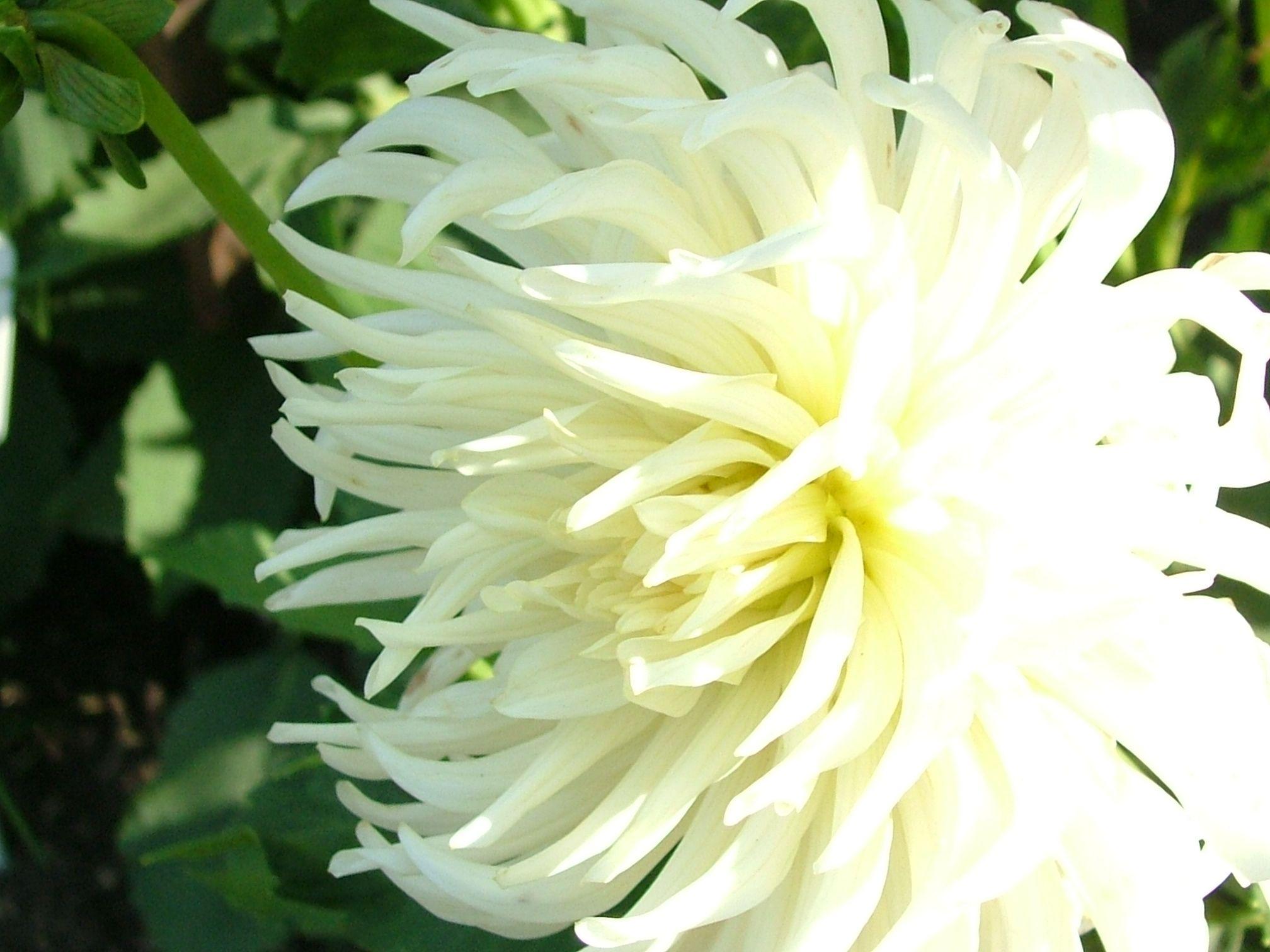 Explore White Flower Photos Imageore