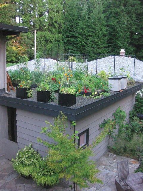 Grow Up Build An Edible Rooftop Garden Garden Therapy Roof Garden Design Green Roof Design Rooftop Garden