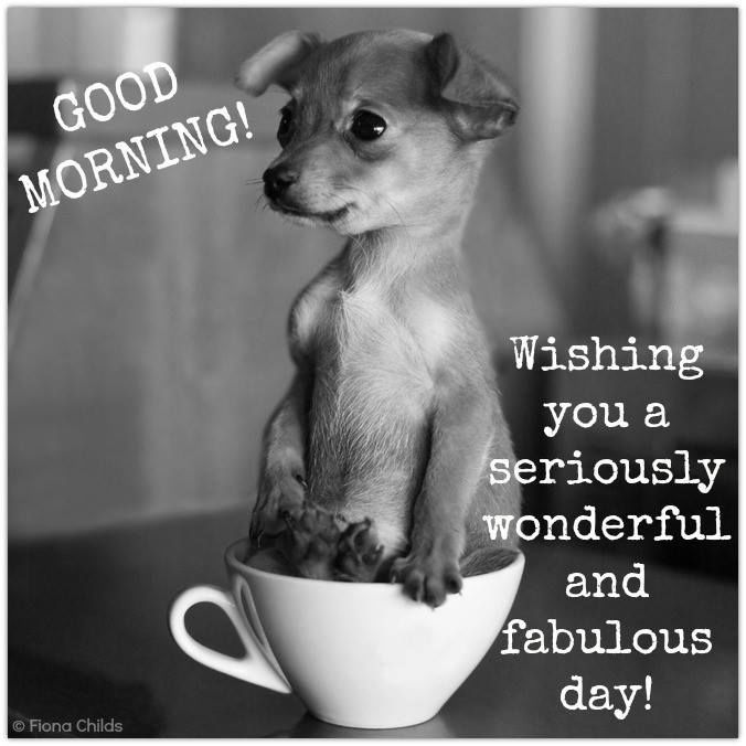 Amazing Cute Good Morning Memes With Wishes Images