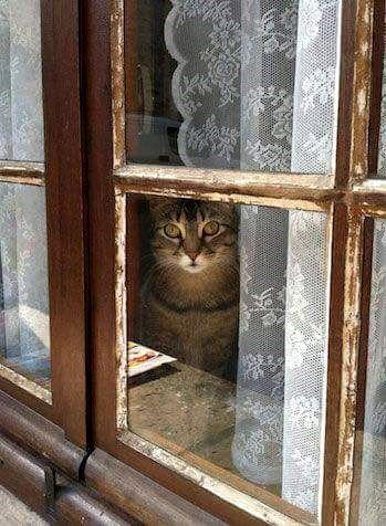 Watch Cat