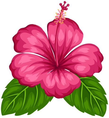 exotic flower png clip art flowers png clipart transparent png rh pinterest com hibiscus vectoriel free hibiscus vector art
