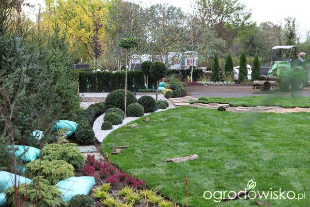 Ogród z lustrem - strona 80 - Forum ogrodnicze - Ogrodowisko