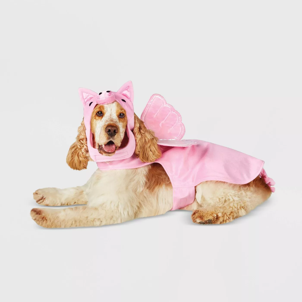 520+Flying Pig Dog and Cat Costume   Hyde & EEK Boutique™
