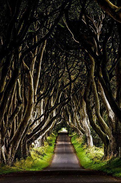 Dark Hedges, Ireland.