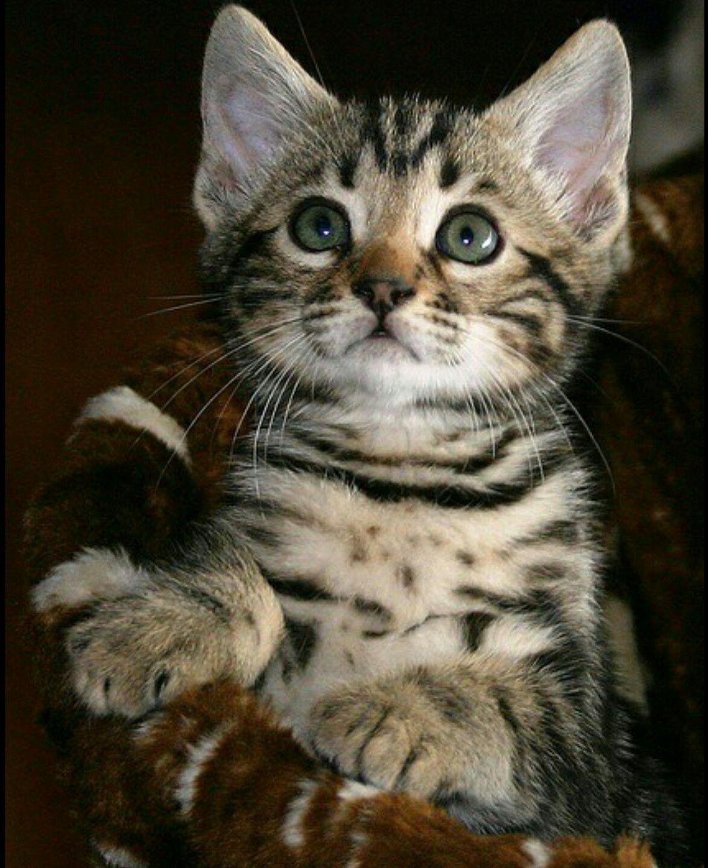 Pin On Kitty Cat 2
