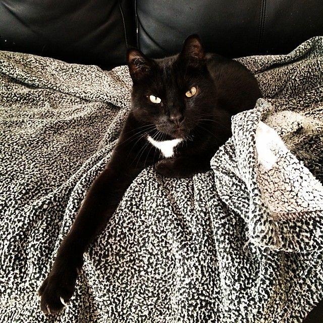 ccarroy #PerleNoire #eegor #cat #beautiful #chaton #pose #instacool