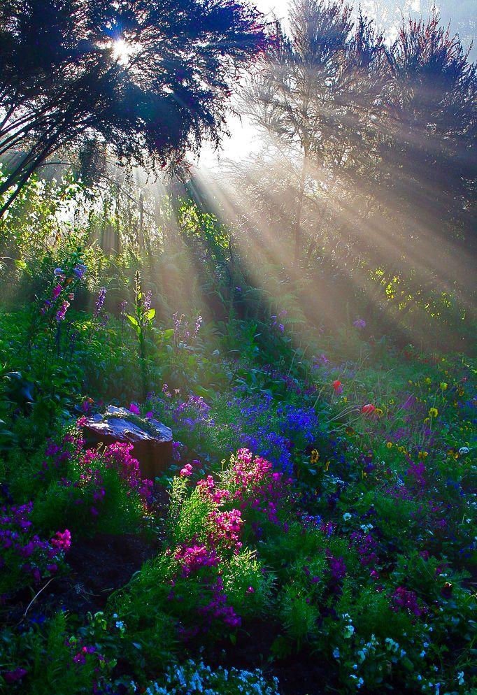 sun rays by Rebecca Tifft