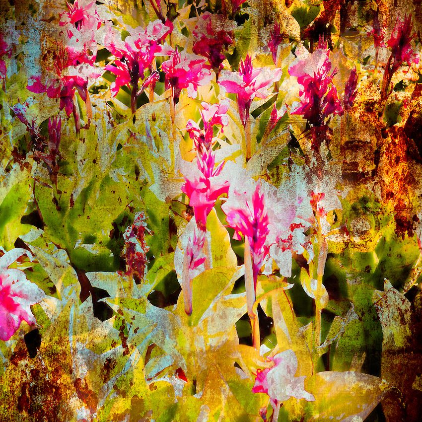 California, Botanical Gardens Craig W. Cutler