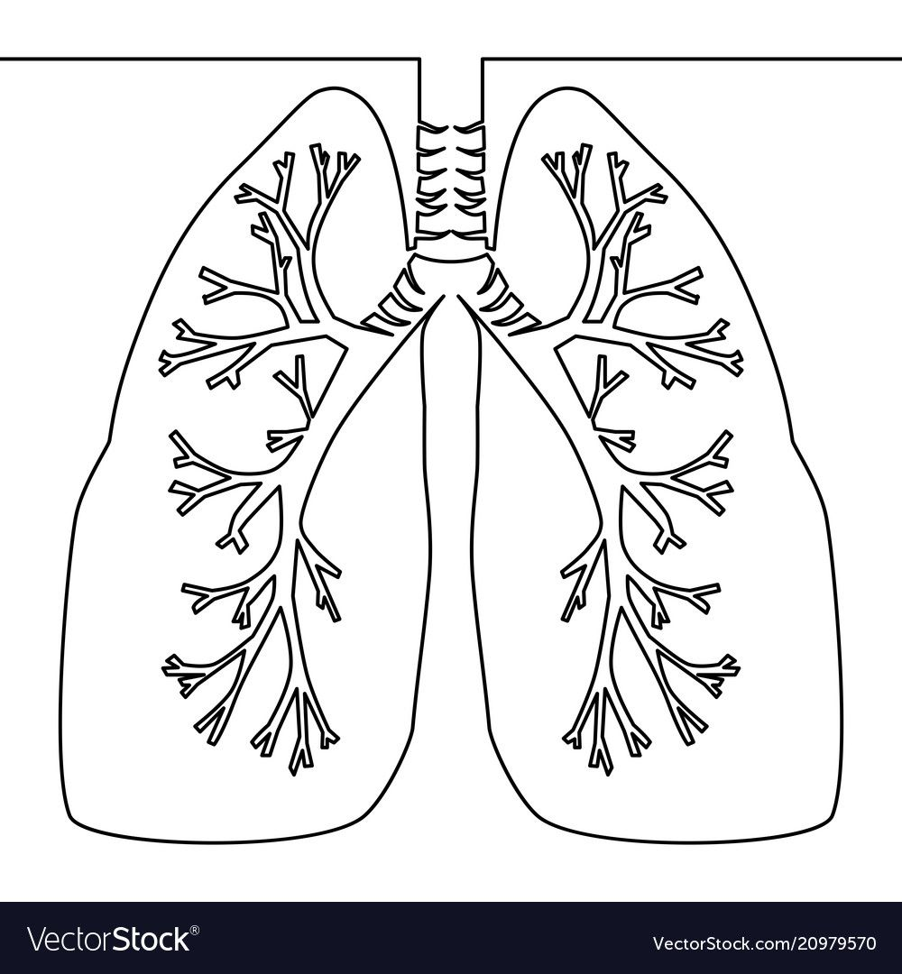 Single Continuous Line Art Anatomical Human Lungs Silhouette One Sketch Outline Drawing Vector Illustration Download A Outline Art Lungs Art Outline Drawings