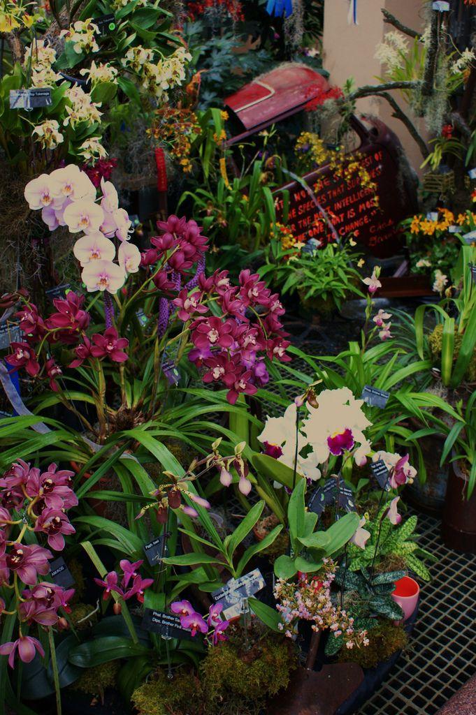 Southeast Pennsylvania Orchid Society and Create a Scene (2)   da KarlGercens.com GARDEN LECTURES