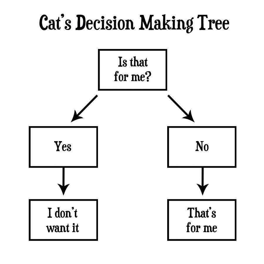 Cat's decisions