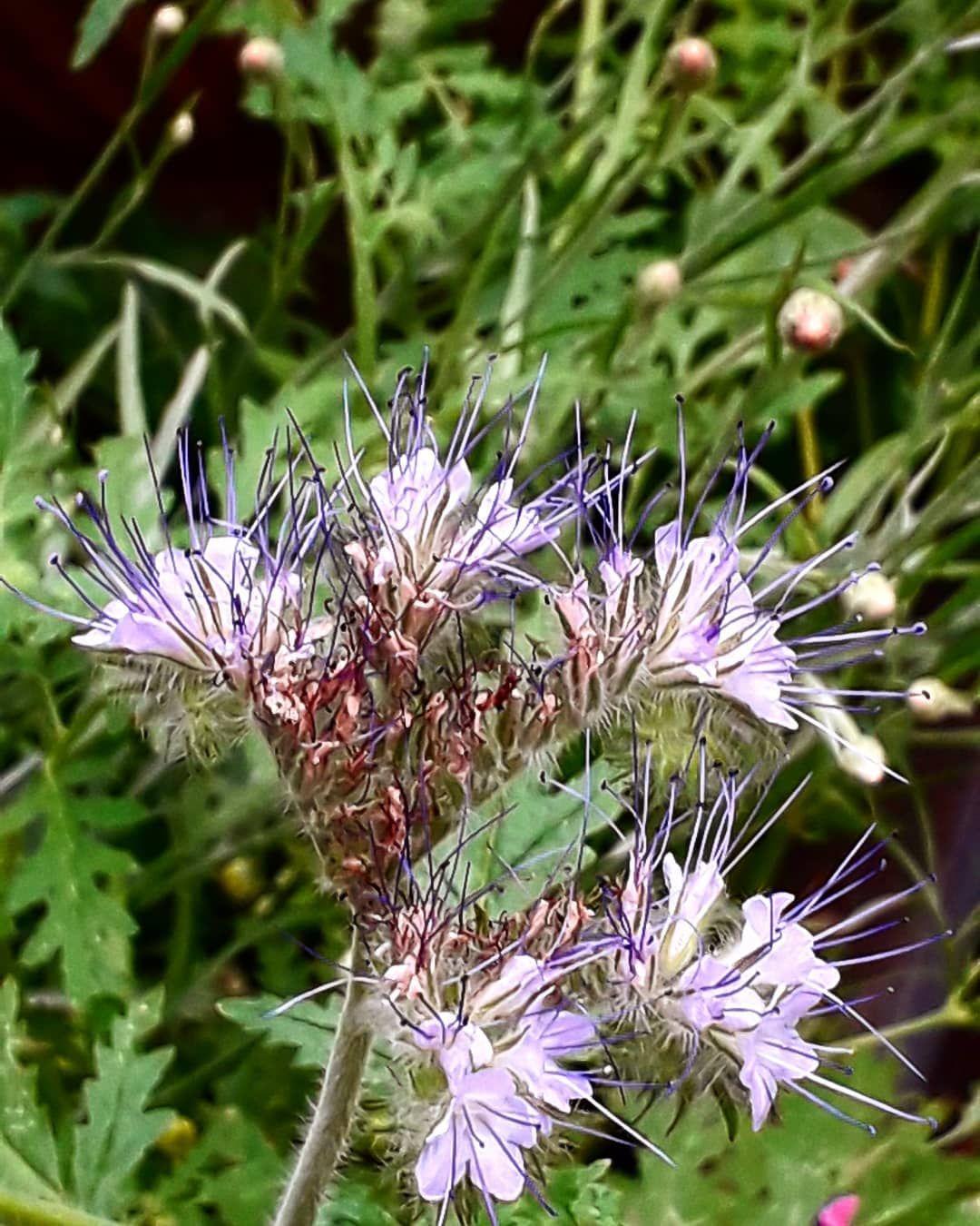Deutschland Germany Sachsen Saxony Dresden Bautzen Weissenberg Sommer Summer Garten Garden Blume Flower Garten Dresden Blumen