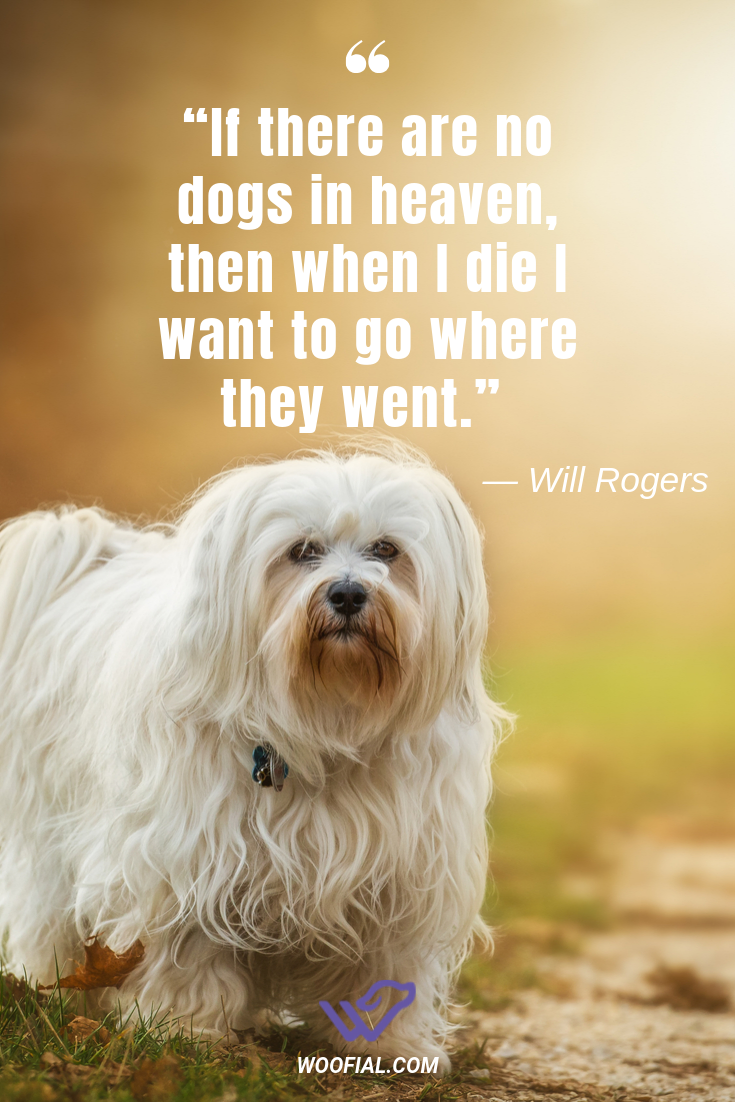 If There Are No Dogs In Heaven Then When I Die I Want To Go Where They Went Will Rogers Dog Dogfunny Dogmemes Dogquotes Doglo Dog Heaven Dogs Smiling Dogs