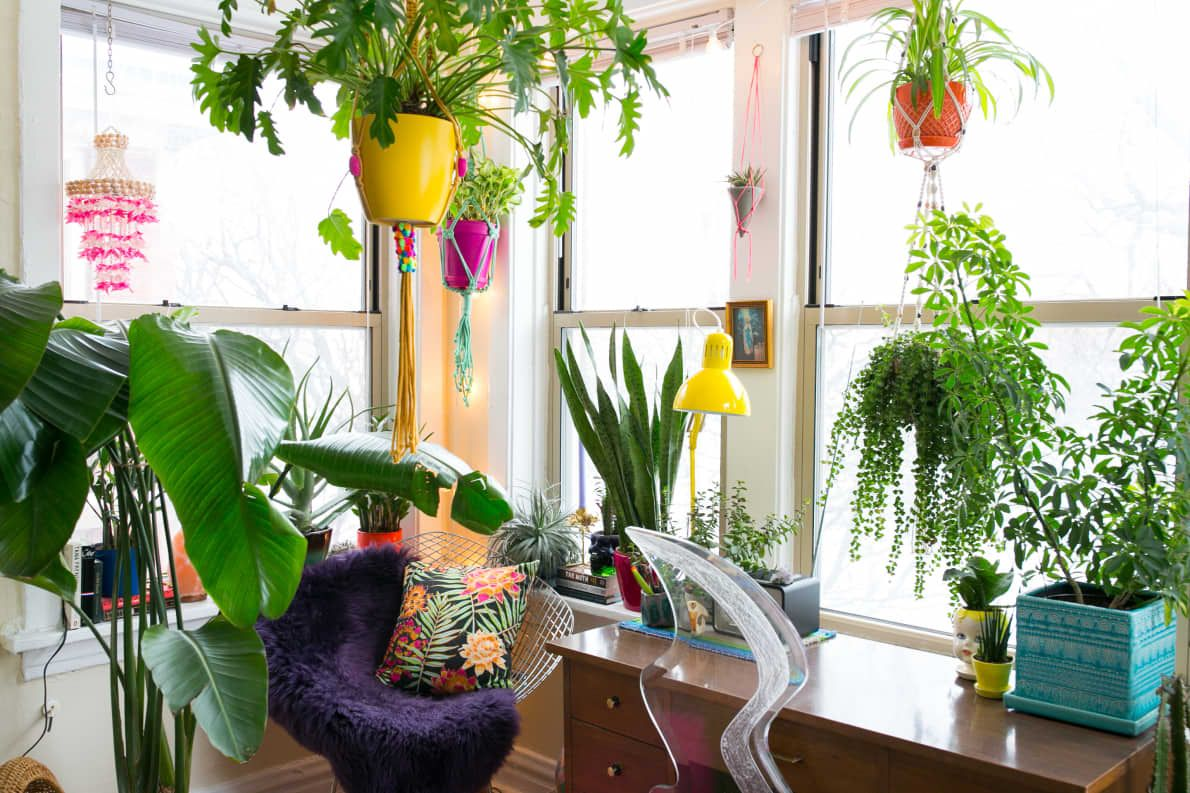 A Modern Maximalist Neon Garden in Chicago  Diy hanging planter