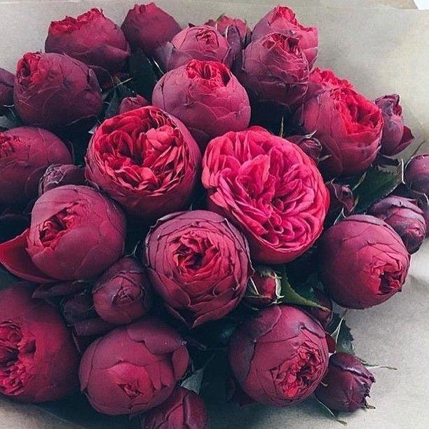 """Мужчина никогда не скажет я был не прав он просто пришлёт цветы. ( Шарлотта Йорк """"Sex and the City"""")"""